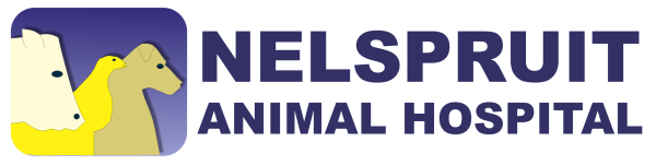 Nelspruit Animal Hospital