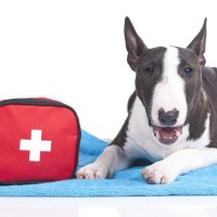 pets-and-first-aid